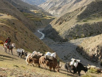 Upper Dolpo to Jomsom Trek