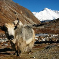 Upper Dolpo to Jomsom Trek 2