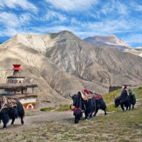 Upper Dolpo to Jomsom Trek 4
